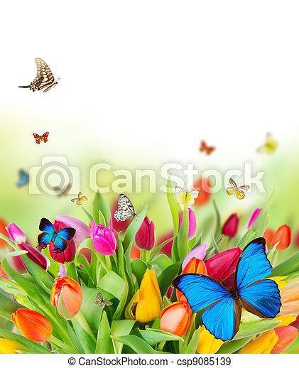 fleurs, printemps, papillons, beau - csp9085139