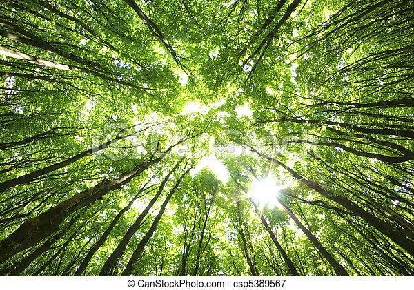 fond, arbres - csp5389567