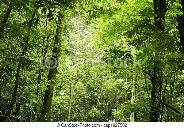 forêt, vert - csp1927502