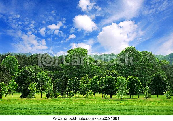forêt verte - csp0591881