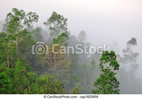 forêt verte - csp1820959