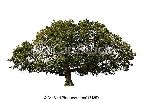 grand arbre - csp0184859