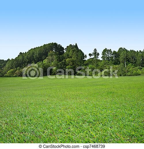 herbe, arbres verts - csp7468739