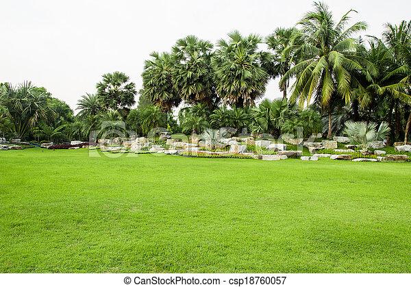 herbe champ, parc, vert - csp18760057