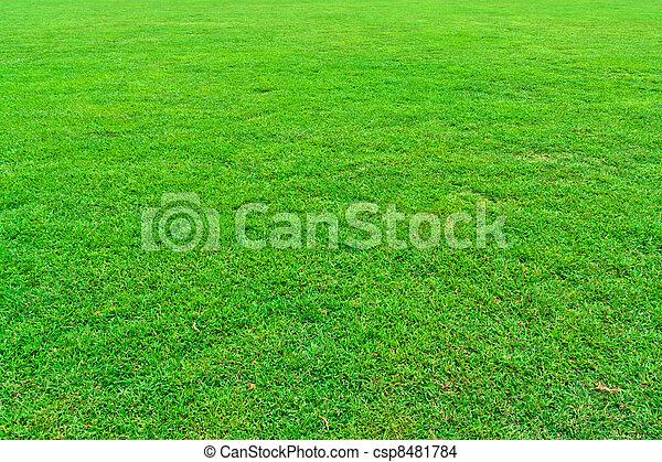 herbe champ, vert - csp8481784