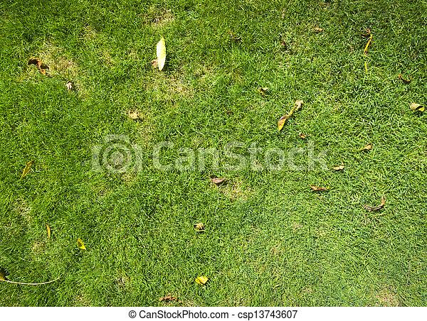 herbe, fond - csp13743607