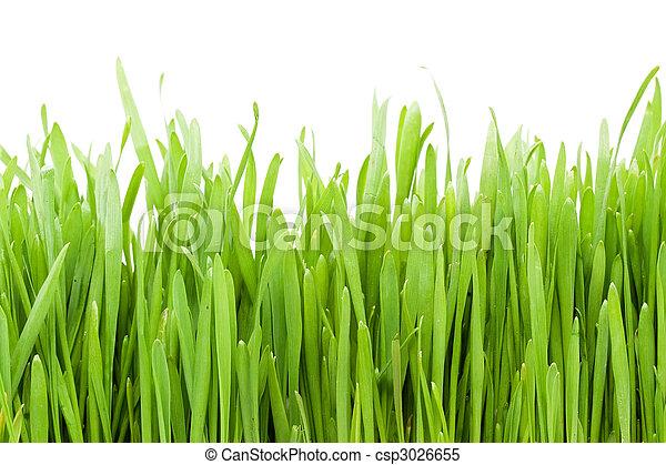 herbe - csp3026655