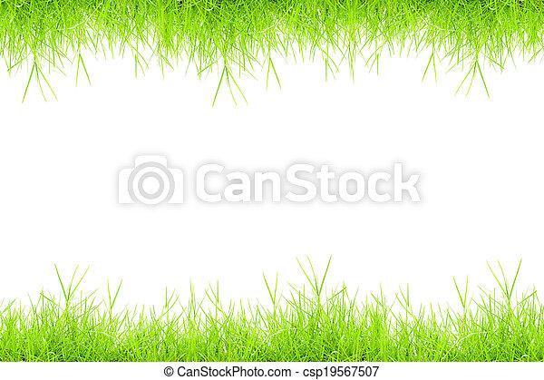 herbe, vert - csp19567507