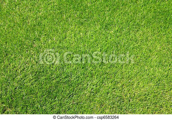 herbe, vert - csp6583264