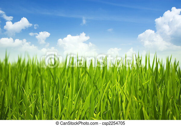 herbe verte, ciel - csp2254705