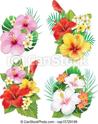 hibiscus, fleurs, arrangement - csp15729199