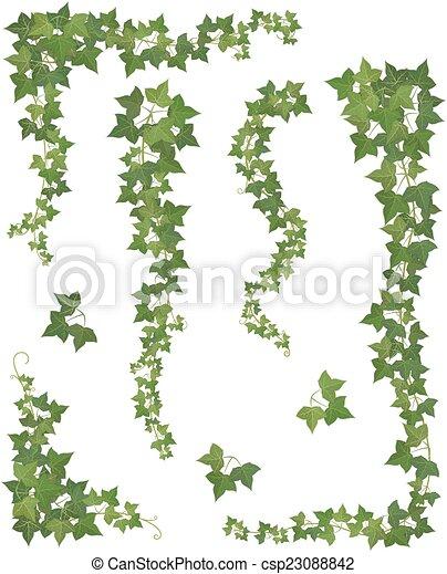 ivy., ensemble, branches, pendre - csp23088842
