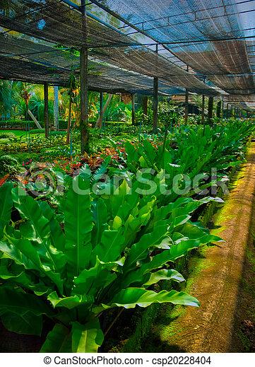 jardin - csp20228404