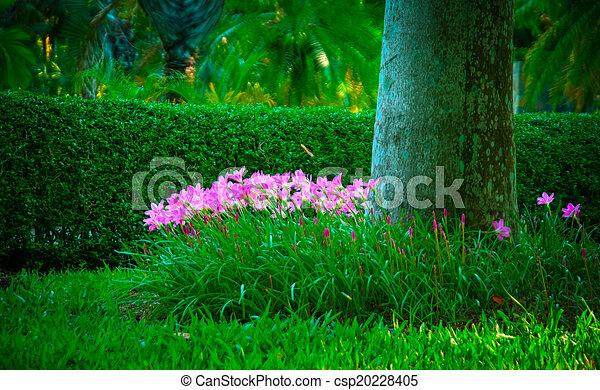 jardin - csp20228405