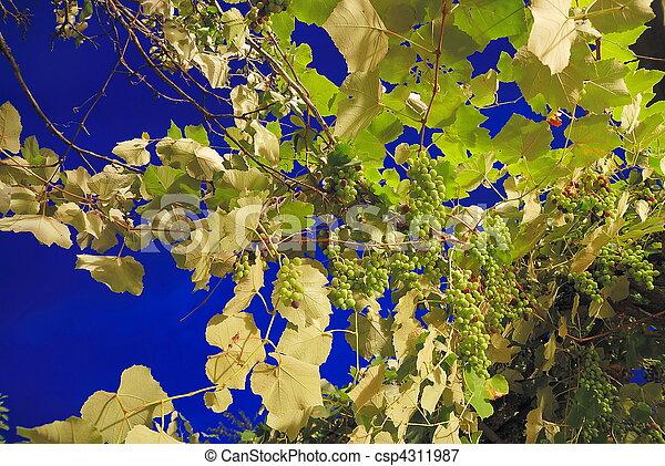 long, raisin, exposition - csp4311987