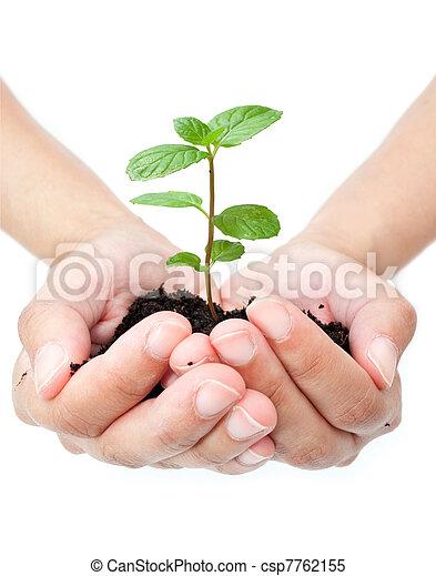 mains, plante - csp7762155