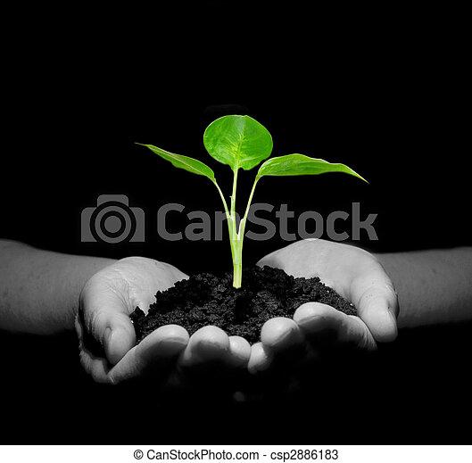 mains, plante - csp2886183