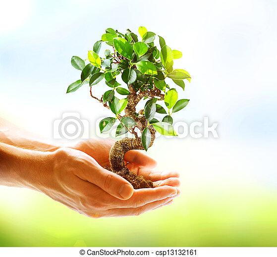 mains, tenue, sur, fond, vert, humain, nature, plante - csp13132161