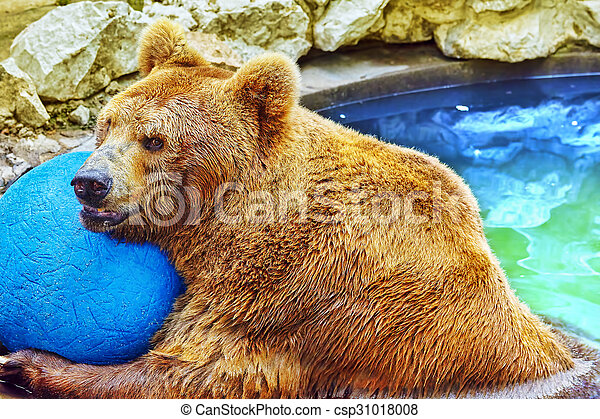 mignon, bear., brun - csp31018008