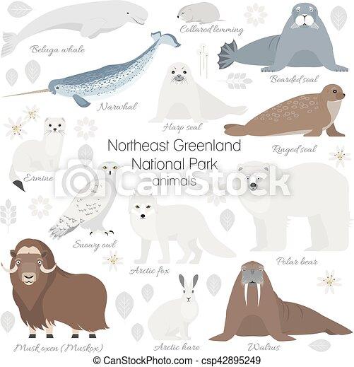 musc, polaire, morse, renard, bœuf, lièvre, ours, hermine, narwhal, cachet, animal, baleine, lapin blanc, arctique, set. - csp42895249