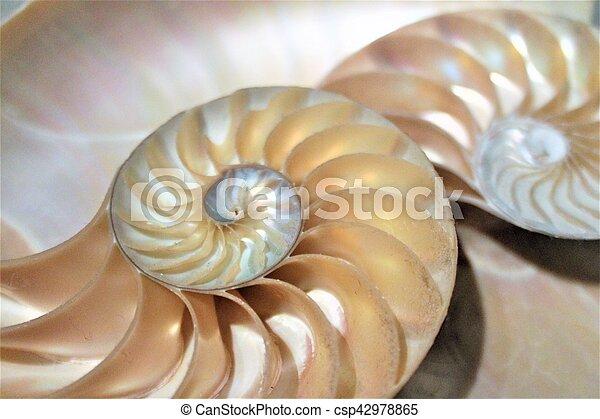 nautile, modèle, section, croix, coquille, fibonacci, mer - csp42978865