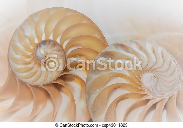 nautile, modèle, section, croix, coquille, fibonacci, mer - csp43011823