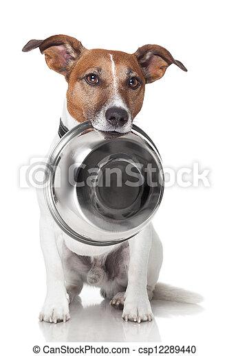 nourriture, bol, affamé, chien - csp12289440