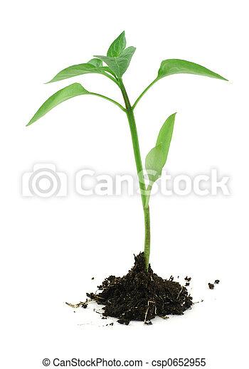 nouveau né, sol, plante, blanc, #2 - csp0652955