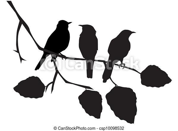 oiseaux - csp10098532