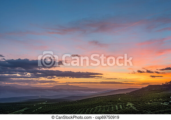 olive, champs, levers de soleil - csp69750919