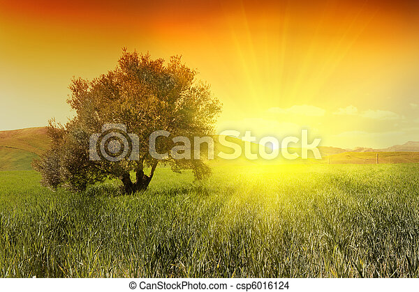 olivier, levers de soleil - csp6016124