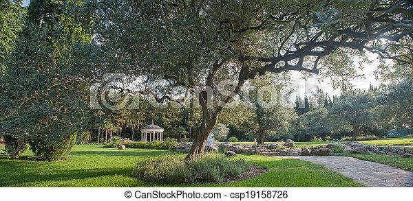 olivier, paysage - csp19158726