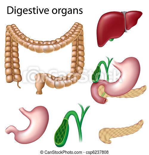 organes digestifs, isolé - csp6237808