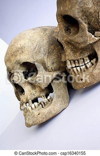 paire, crânes - csp16340155