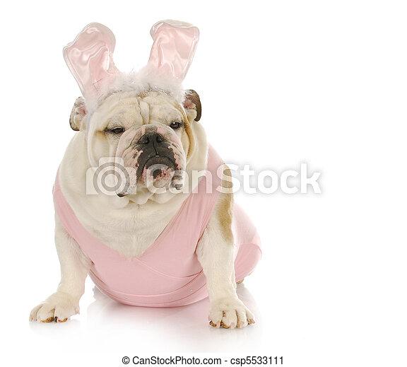 paques, chien - csp5533111