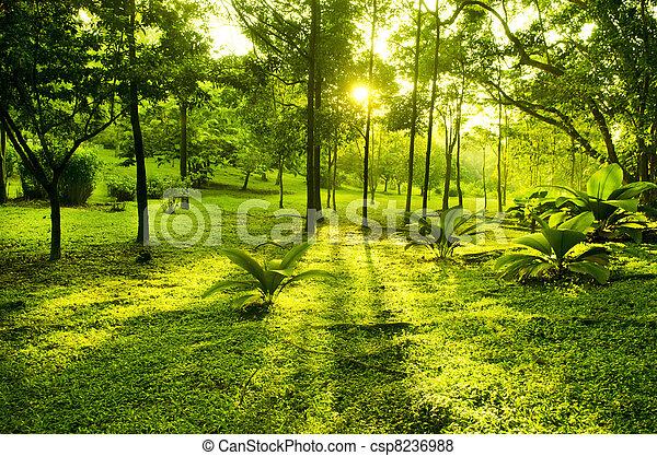 parc vert, arbres - csp8236988