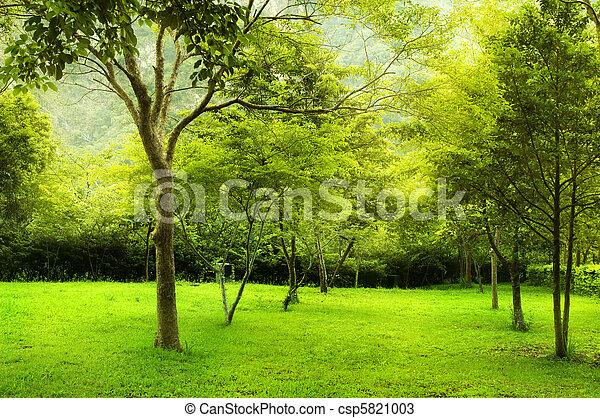 parc vert, arbres - csp5821003