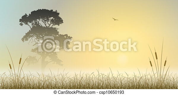 paysage brumeux - csp10650193