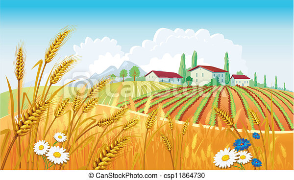 paysage rural, champs - csp11864730
