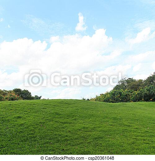 pelouse verte, parc, arbres - csp20361048