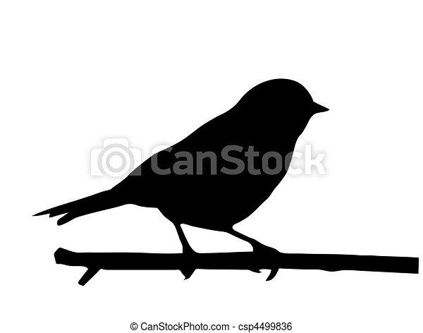 petit, vecteur, silhouette, oiseau, branche - csp4499836