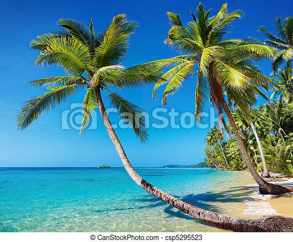 plage, thaïlande, exotique - csp5295523