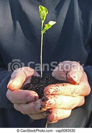 plante, arbre - csp0083530