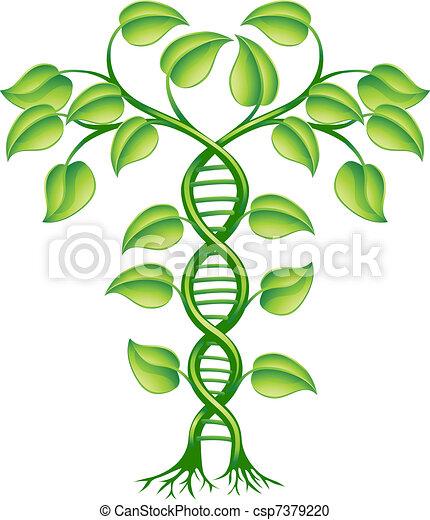plante, concept, adn - csp7379220