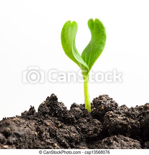 plante, croissant, vert - csp13568076