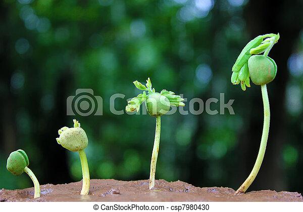 plante, growth-baby, usines - csp7980430