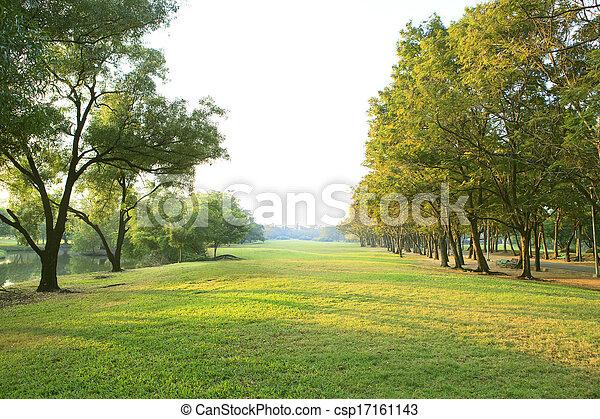 plante, herbe, naturel, polyvalent, lumière, espace public, parc, usage, arbre, matin, champ, arrière-plan vert, copie, ou, toile de fond - csp17161143