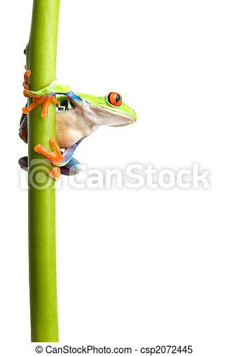 plante, isolé, grenouille, tige - csp2072445