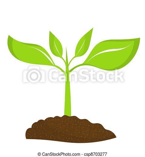 plante, jeune - csp8703277