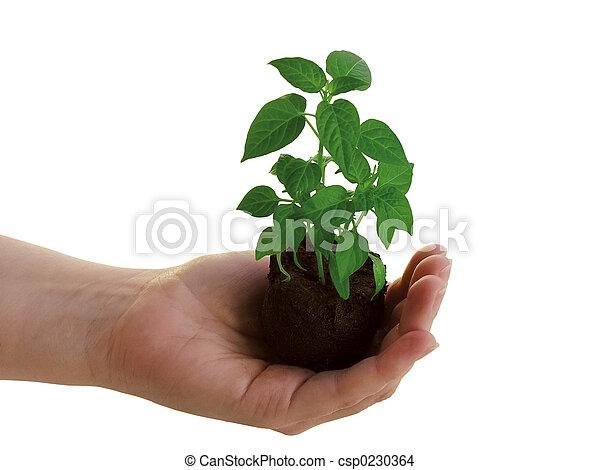 plante, main - csp0230364